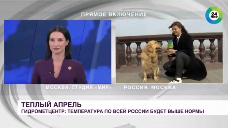 Retriver prekinuo novinarki uživo uključenje i otrčao sa mikrofonom (VIDEO)