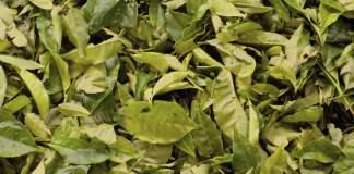 El Gobierno regulará el uso de yerba mate