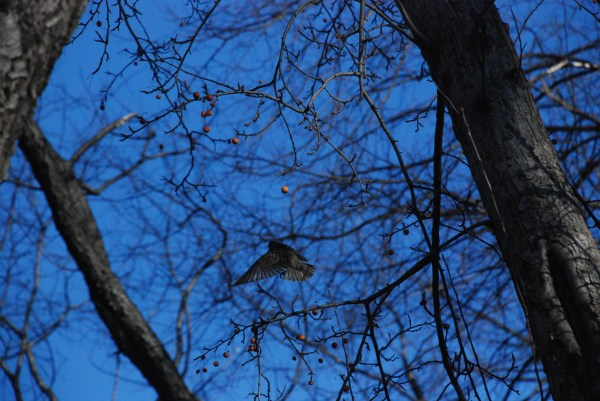blue sky 2012, photo by Cathy Stewart