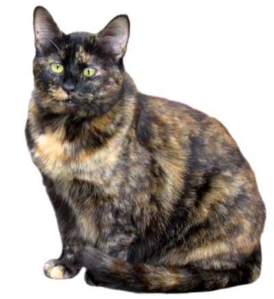 Suzy the cat