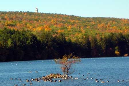 Fall foliage. Reservoir 6. West Hartford CT.