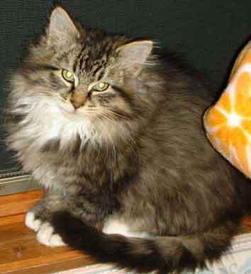 Julia cat