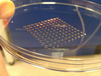 3D printed stem cells. Credit: livescience