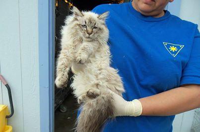 Credit: Wasco Animal Shelter
