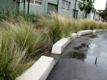 el-cerrito-rain-garden