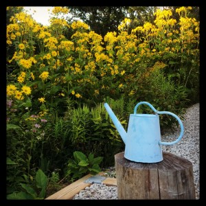 cup plant and watering can BirdNest Garden Farm