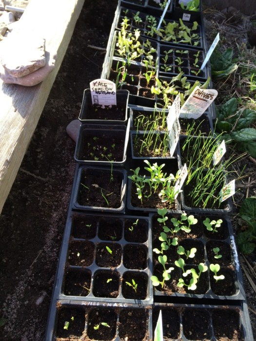 vegetable seedlings wiarton cold frame