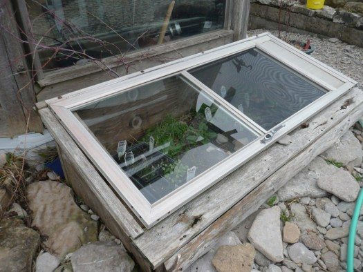 cold frame lid down vegetables wiarton