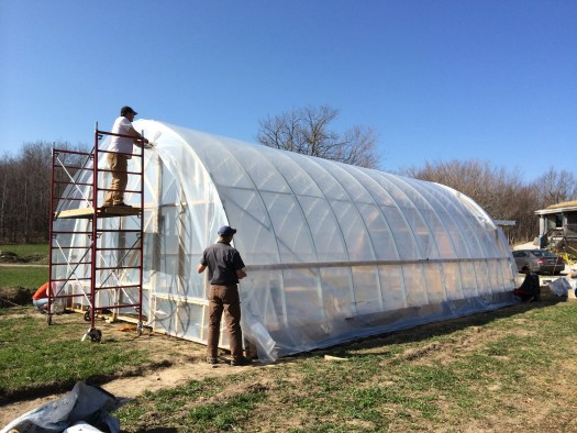 Putting the plastic on the hoop house was a huge undertaking.