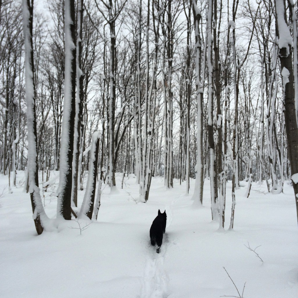 Walking the dog on the Bruce Trail in winter