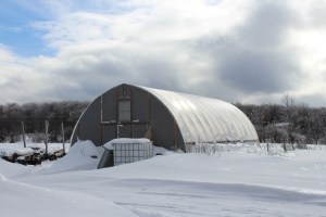 Gothic arch hoop house in winter Ontario