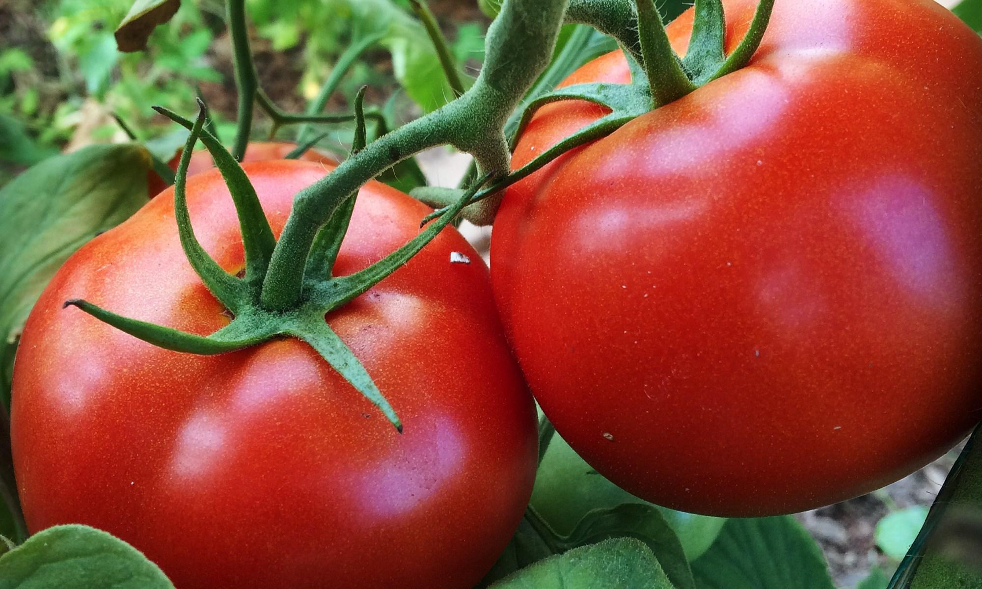 Red Tomatoes Polka Dot Hen Produce Wiarton