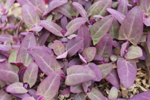 orach seedlings fresh produce wiarton