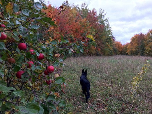 An autumn dog walk around the meadow at Bird's Nest Garden Farm