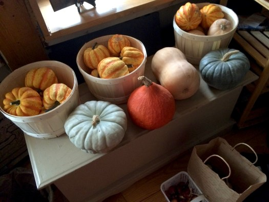 A beautiful selection of winter squash Polka Dot Hen Produce
