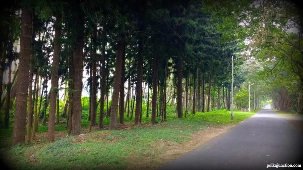 FRI: Forest
