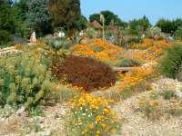 A Garden Unfolds   Polley Garden Design
