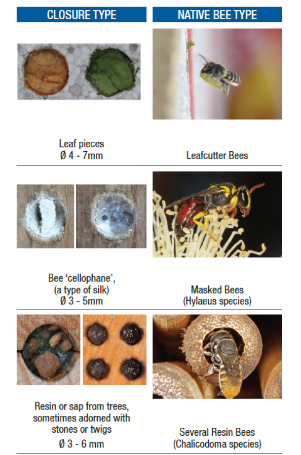 Different nest closures and the bees that make them