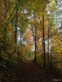 walking in the woods @Mt. Medvednica