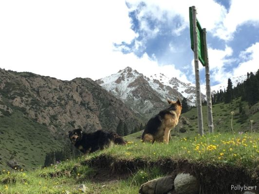 our companions on the way back @Altyn Arashan