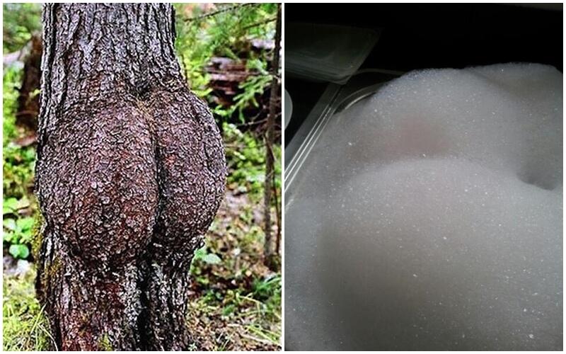 ass (4)