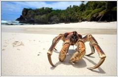 【圖集】螃蟹這種生物