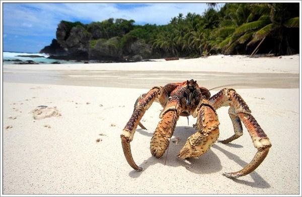 crabs-07022016-001