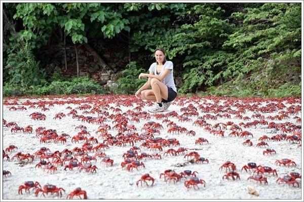crabs-07022016-005
