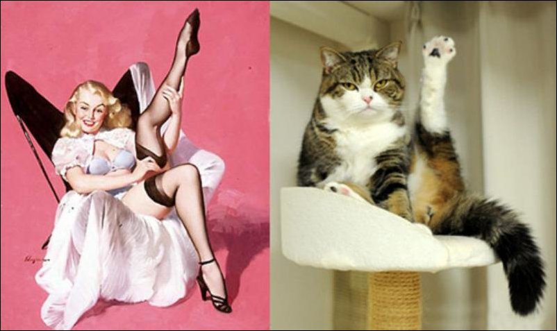 cats-pinup-girls-033