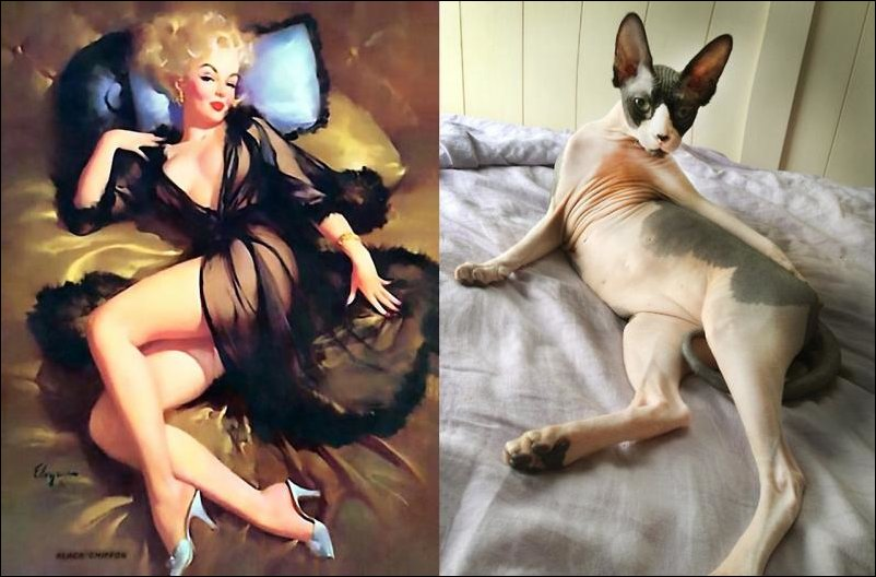 cats-pinup-girls-042