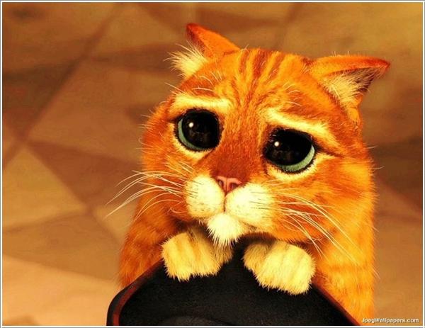saddest-cat1