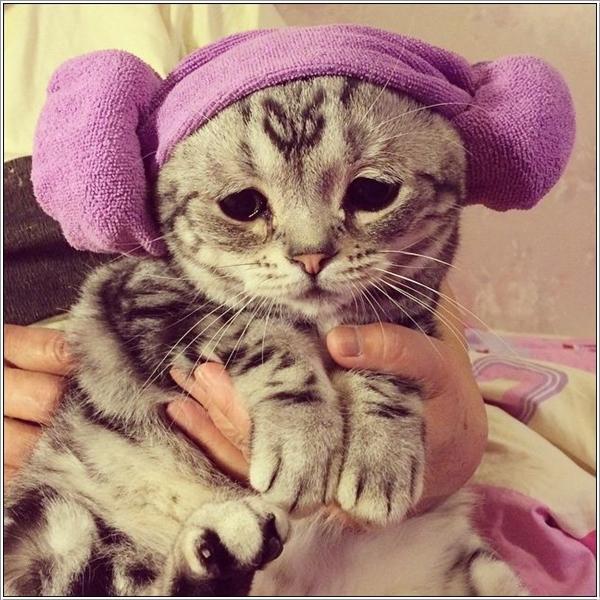 saddest-cat10