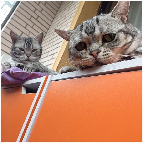 saddest-cat4