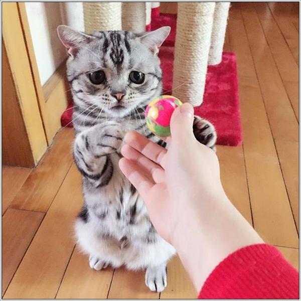 saddest-cat7