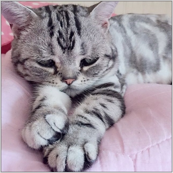 saddest-cat8