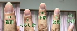 クラシックギターの爪の形