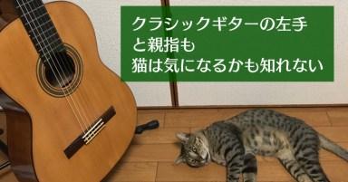 クラシックギターの左手と親指と猫1
