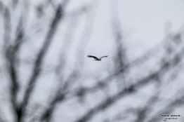 Bieszczady ptaki bieszczadzkie ptaki 009