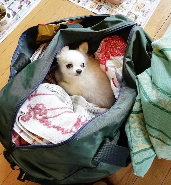バッグの中に入り込むポルン。