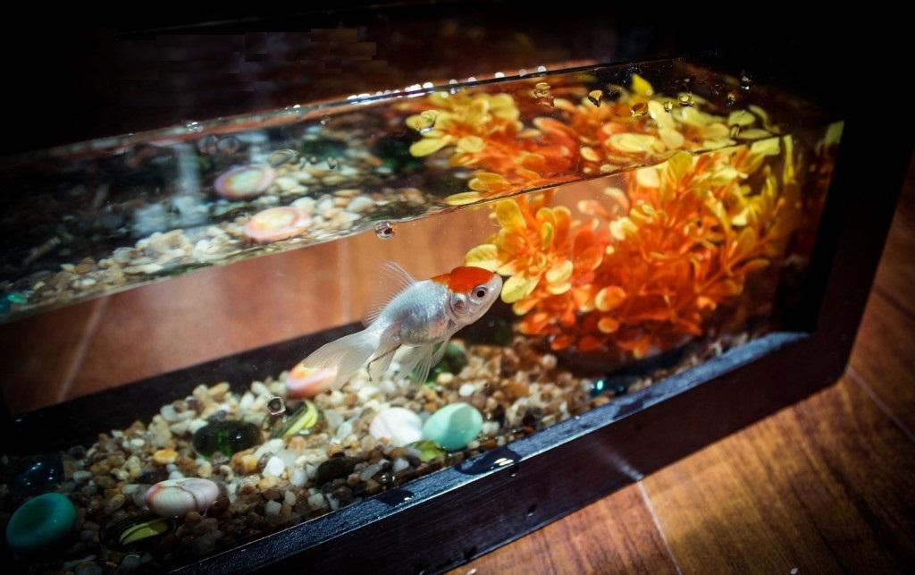 Đây là một mẫu bể cá mini handmade của Quà Tặng Hoàn Hảo chúng tôi