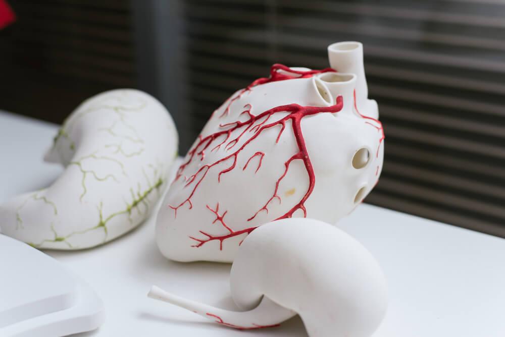 organs printed