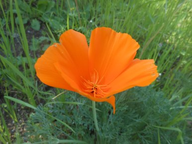 Spring In Orange