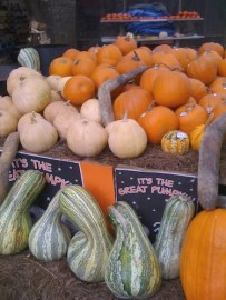 Squashes and Gourds Herald Autumn (picture credit, Barbara Forbes-Lyons)