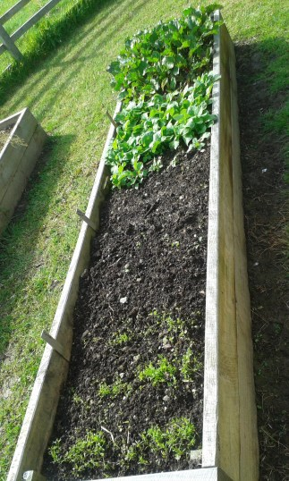 beetroot, radishes, spring onion, carrots and little space for just in case