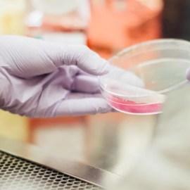Der Einfluss von Polyphenolen auf das Immunsystem