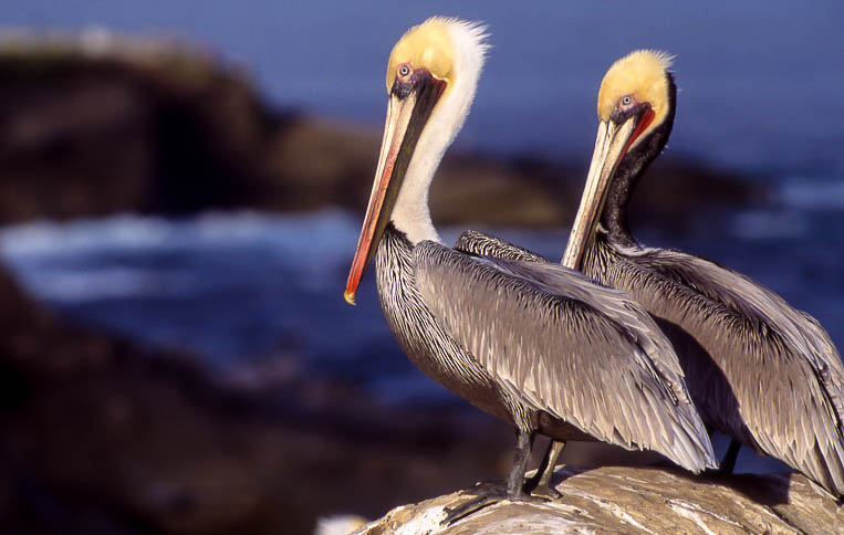 Free Pelican Shoot with Steve Cirone