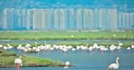 https://www.egeligazete.com/genel/izmir-kus-cennetine-jeotermal-kuyulari-acilmasi-icin-ced-sureci-baslatildi. İçinde İzmir Kuş Cenneti'ni barındıran Gediz Deltası'nda 3 bin metrekarelik bir alanda 2 adet jeotemal kuyusu açılması için ÇED süreci başlatıldı. Kuyuların Ramsar Sözleşmesi'ne göre korunması gereken Kuş Cenneti'nin […]