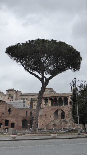Only monument in Rome not made out of stone: the Italian Stone Pine. (No joke.)