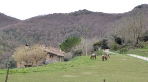 Wakeful horses under a hibernating volcano.