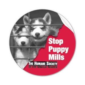 stop-puppy-mill